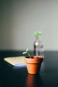 seed plant grow